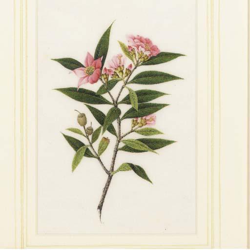 A set of six botanical ricepap
