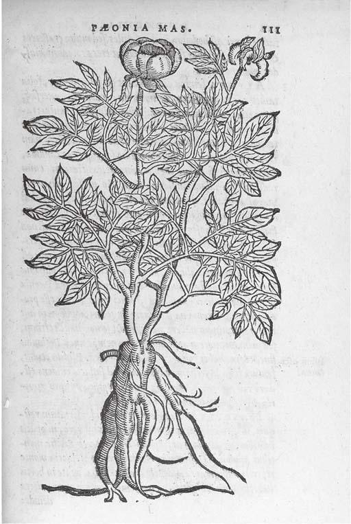 DODOENS, Rembert (1518-85).  F