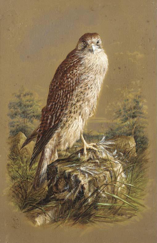 Harry Bright (1846-1895)
