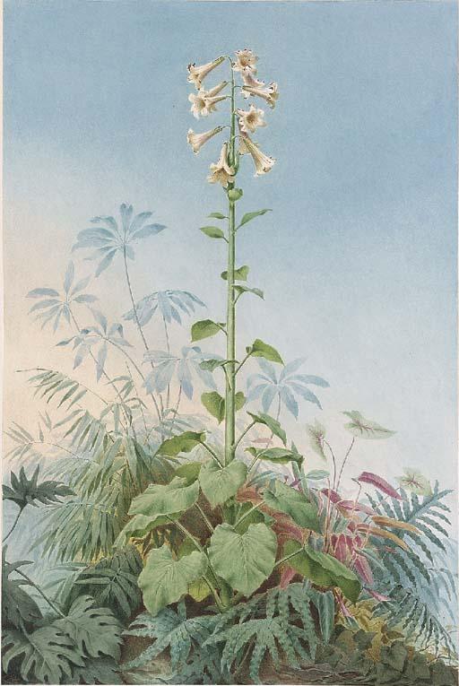Carl W.E. Fink (Cassel 1814-af