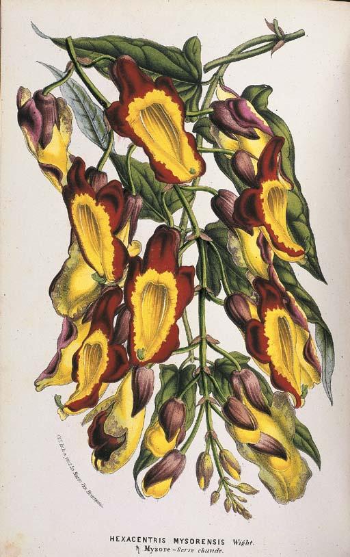 LEMAIRE, Charles (1801-1871), Louis Benot VAN HOUTTE and others (editors). Flore des Serres et des Jardins de l'Europe. Ghent, Van Houtte, 1845-1875.
