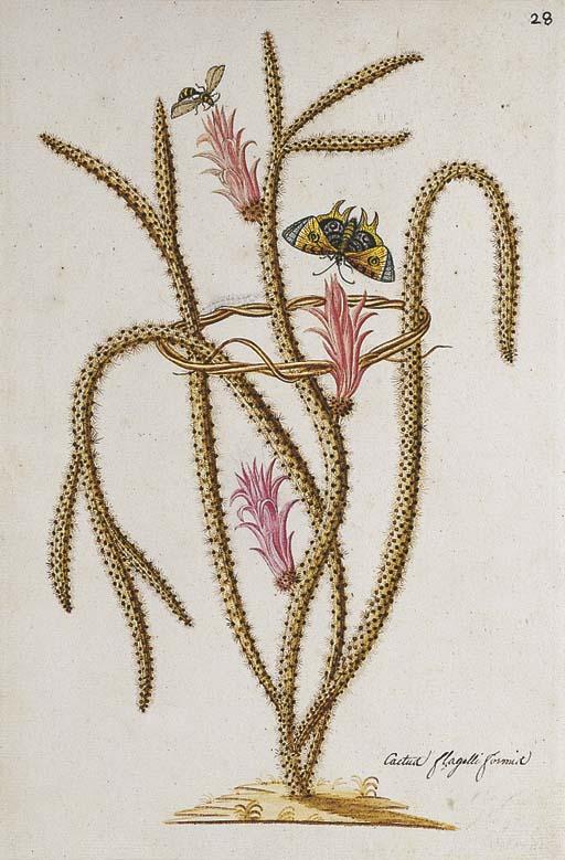 FRANCOIS PALAMEDE, MARQUIS DE SUFFREN (French, 1753-1824)