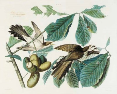 AFTER JOHN JAMES AUDUBON, by W