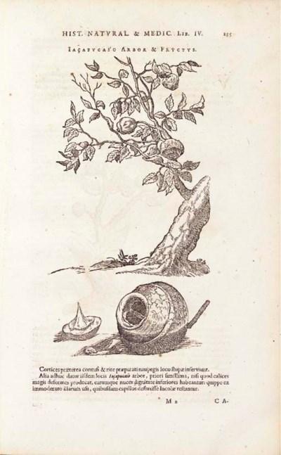 PISO, Willem (1611-1678), auth