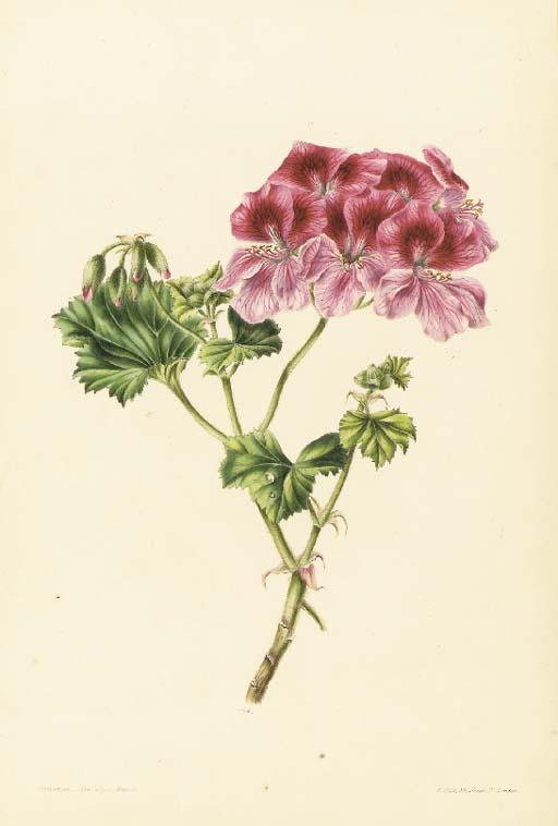 JAMES ANDREWS (1801-1876)