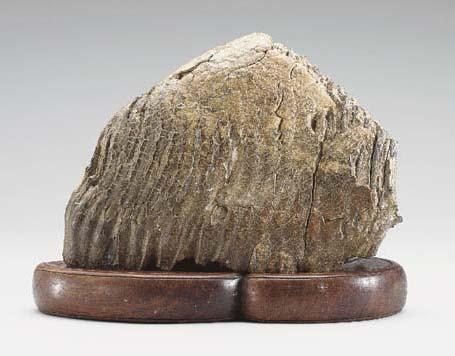 A PETRIFIED WOOD 'SCHOLAR'S RO