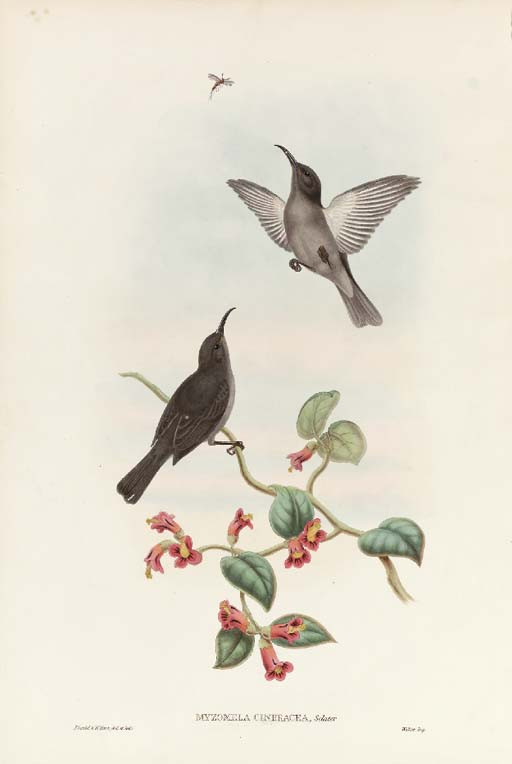 JOHN GOULD, and WILLIAM HART (