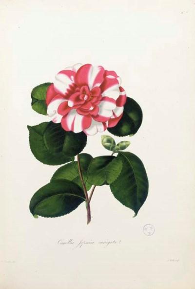 BOOTH, William Chandler (ca. 1