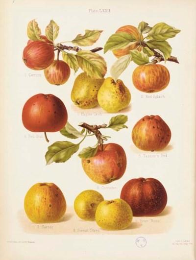 HOGG, Robert (1818-97) and Hen