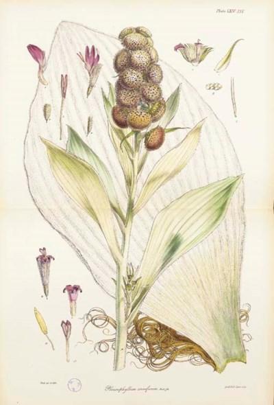 HOOKER, Sir Joseph Dalton (181