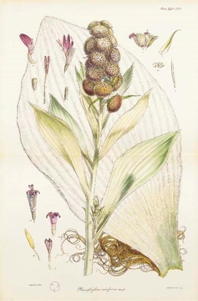 HOOKER, Joseph Dalton. The Rho