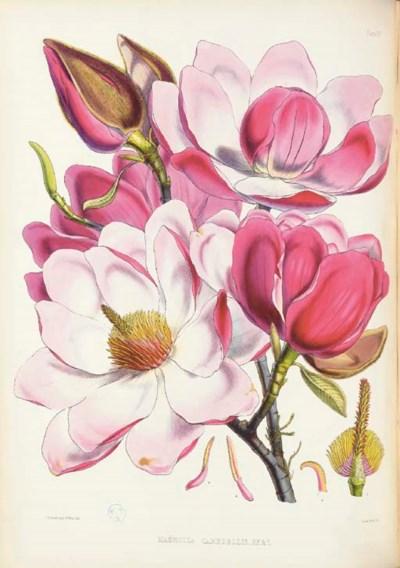 HOOKER, Joseph Dalton. Illustr