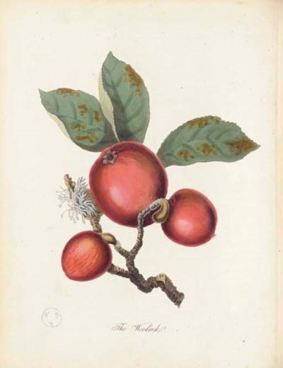 KNIGHT, Thomas Andrew (1759-18