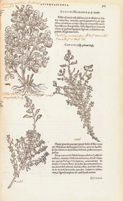 LOBEL, Matthias de (1538-1616)