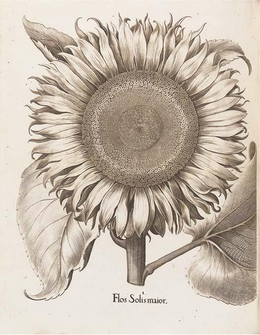 BESLER, Basil (1561-1629). Hor