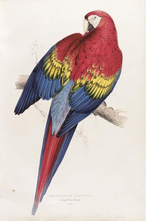 LEAR, Edward (1812-1888). Illu
