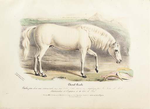 LOW, David (1786-1859). Histoi