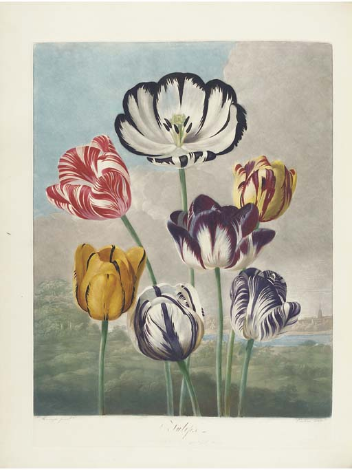 THORNTON, Robert John (c. 1768