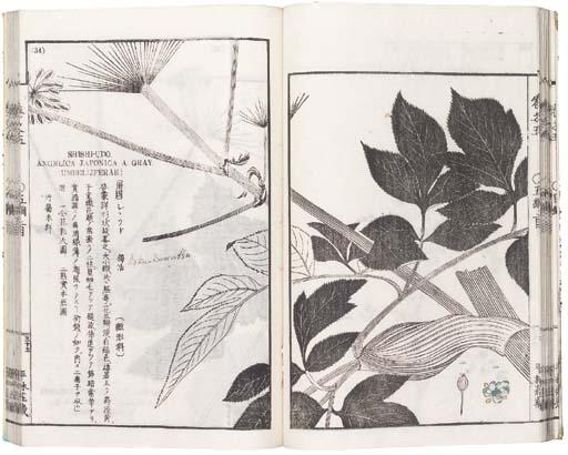 Iinuma Tatsuo (Yokusai)