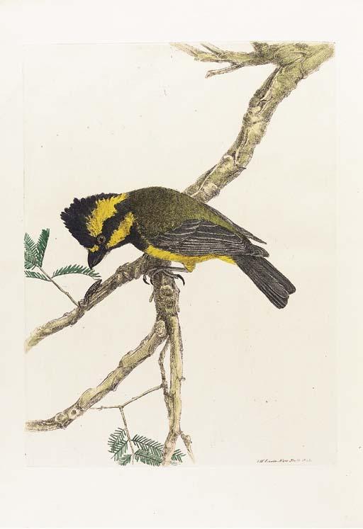 LEWIN, John William (1770-1819