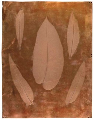 NATURE PRINTING -- Alois AUER