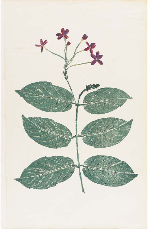 NATURE PRINTING -- Henry SMITH