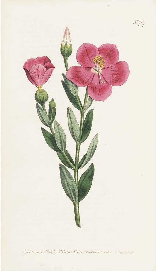 CURTIS, William (1746-99) and