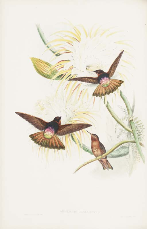 GOULD, John (1804-1881) and Richard Bowdler SHARPE (1847-1909). A Monograph of the Trochilidae, or Family of Humming-Birds. London: Taylor and Francis for the author, [1849]-1861
