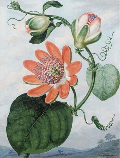 Sydenham Teast Edwards (1768-1