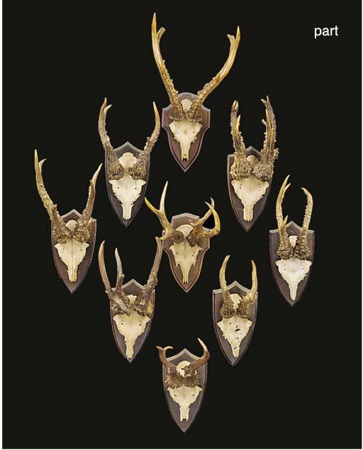 Twenty mounted sets of roe dee
