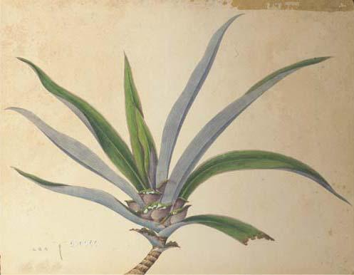 A botanical study, 19th centur