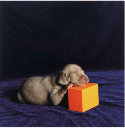 WILLIAM WEGMAN (b. 1942)