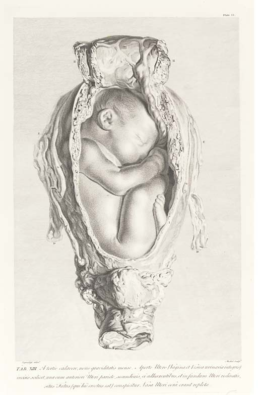 HUNTER, William (1718-83).  Anatomia uteri humani gravidi ... The Anatomy of the Human Gravid Uterus exhibited in Figures, Birmingham: John Baskerville, 1774. 2° (658 x 476mm).  Frontispiece portrait of John Haighton by J. Kennerly after H. Ashby, 34 engraved plates after Jan van Rymsdyk (fl. 18th century), Edward Edwards (1738-1806), Alexander Cozens (d. 1786) and Blakey, text printed in double columns in Latin and English. (Some light spotting, stronger towards the end, mainly marginal thumb-soiling, outer margin of plate 3 slightly cropped, new tissue guards.) Modern cloth. Provenance: Faculty of Physicians & Surgeons [of Glasgow] (bookplate).