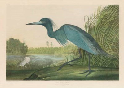AFTER JOHN JAMES AUDUBON BY JU
