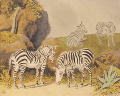 Four zebras in a rocky landsca