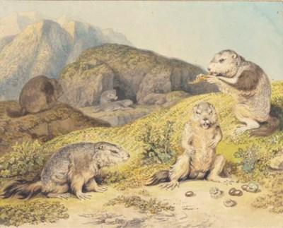 Three marmots in an alpine lan