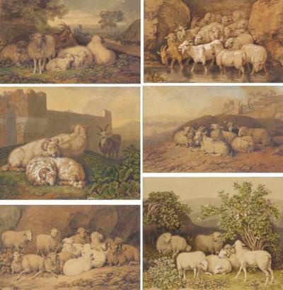 Seven sheep among shrubs in an