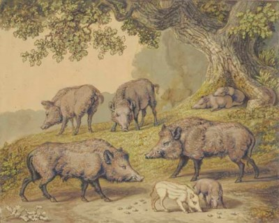 Five wild boar with four pigle