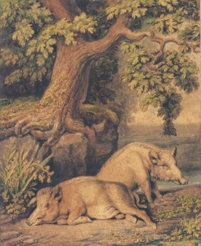 A wild boar and a sow beneath