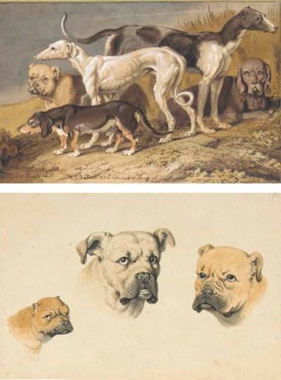 A mastiff, a lurcher, a greyho
