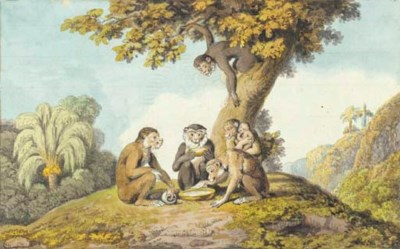 A family of monkeys drinking f