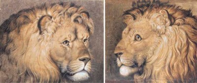 Head of a lion in three-quarte