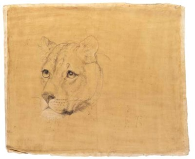 Head of a lioness, in three-qu
