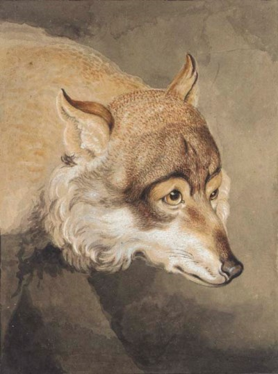 Head of a wolf in three-quarte