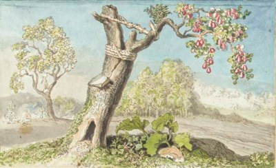 A blasted pear tree, the trunk