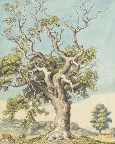 A solitary oak tree, with a do