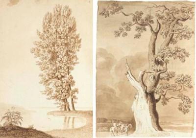 A pine tree on a bank, a wood