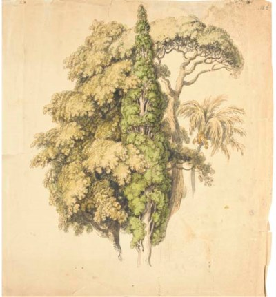 An oak tree, a cypress and a R