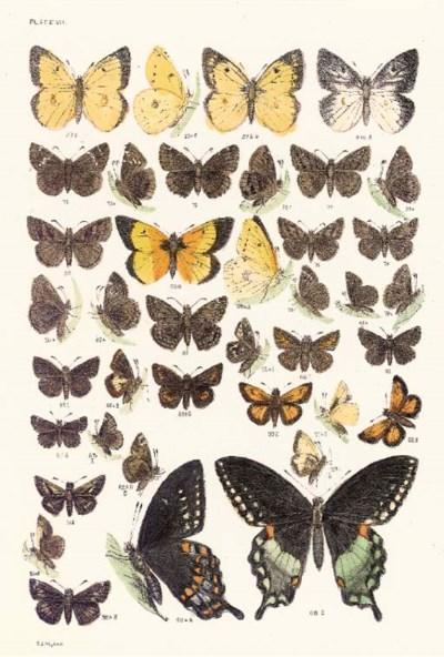 C.J. MAYNARD (ACTIVE 19TH CENT