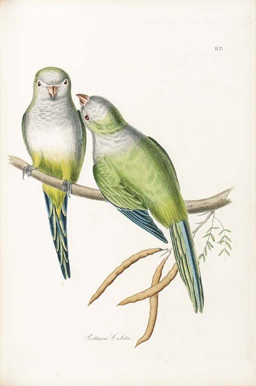 JARDINE, William (1800-1874) a